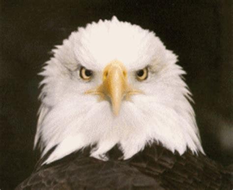 imagenes con movimiento de animales imagenes para sus post de animales com movimiento taringa