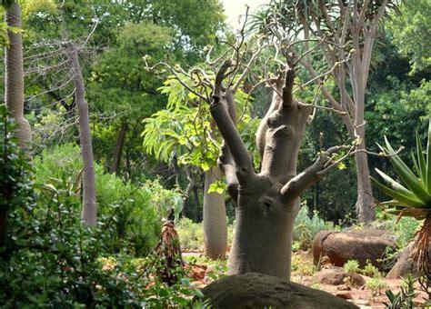 Botanical Gardens Pretoria Pretoria National Botanical Garden Pretoria