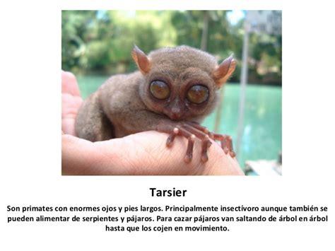 imagenes raras de animales animales raros