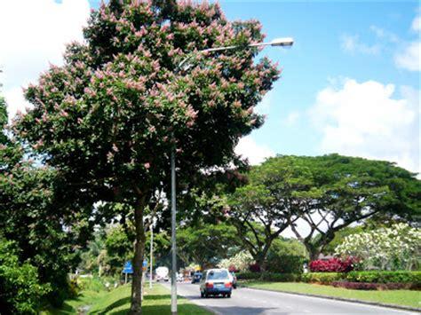 Batik Andira my kambatik world may flowering trees part i