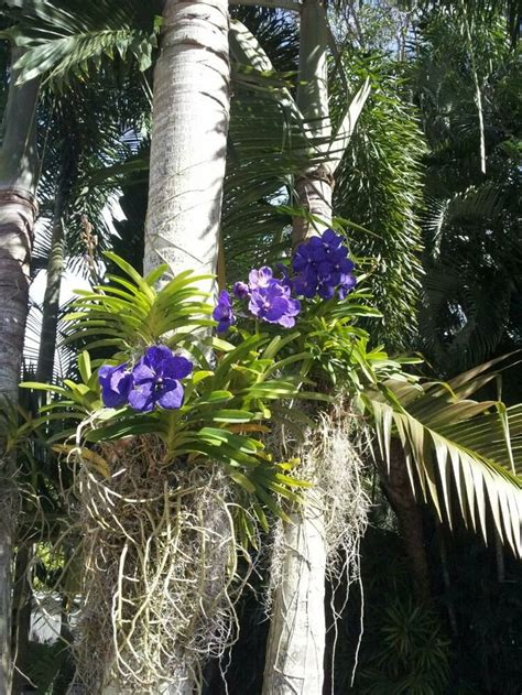 Orchids Grow Beautifully On These Palm Trees How Does Palm Gardens Flowers