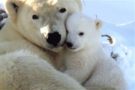 imagenes de la familia de osos imagenes tiernas de ositos polares imagui