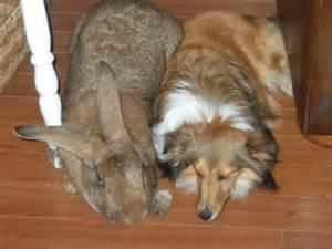 Baby Bunnies In Backyard - best house rabbit breeds rabbit cages uk