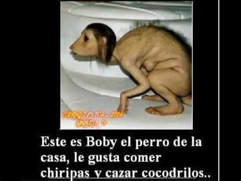 Imagenes De Animales Feos Y Chistosos | videos de feos graciosos wmv youtube