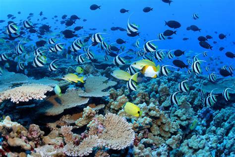 What are the three main types of coral reefs?