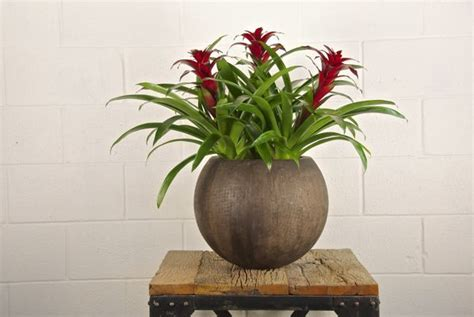 houston s online indoor plant pot store extra large pin by houston interior plants com on our plant selection