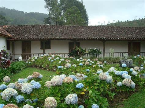 imagenes de jardines con hortensias file jard 237 n de hortensias en la iglesia de orosi jpg
