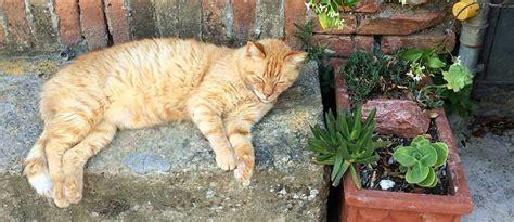 katzenjahre in menschenjahre tabelle katzenjahre wie alt werden katzen tierisch wohnen
