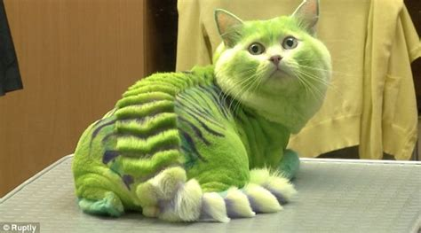 dogs that look like cats they looked boring before pet styling salon dyes cats to look like green dragons