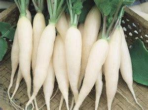 benih lobak putih ordinary radish