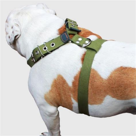 Sepatu Wolf Buldog Brown Pull Up Leather compare price to doberman harness tragerlaw biz
