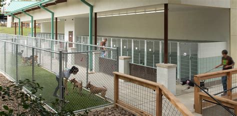 san antonio shelter jackson architects san antonio animal shelter