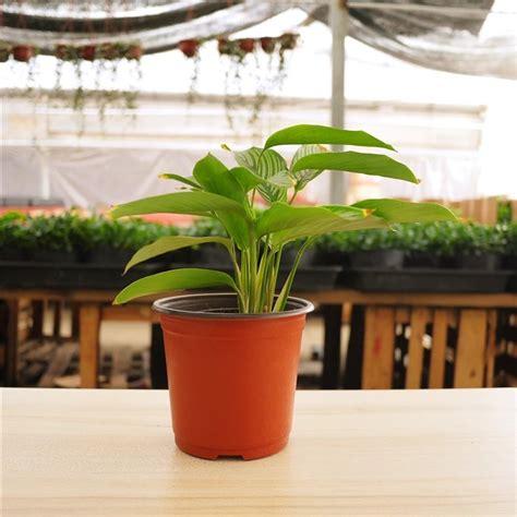 Thin Plant Pots Garden Supplies Plastic Flower Pot Color Flower