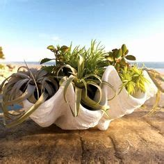 shop faux clam shell bowls   outdoor planters