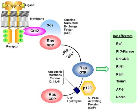 h ras protein frontiers in bioscience 16 1693 1713 january 1 2011