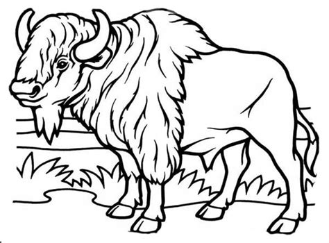 Bison Face Coloring Coloring Pages Bison Coloring Page