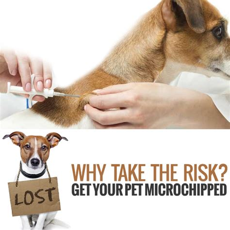 microchip registration pre paid microchip for pets includes registration hanly vet official website