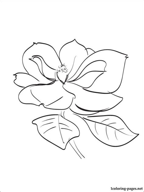 coloring pages of magnolia flowers magnolia coloring page coloring pages