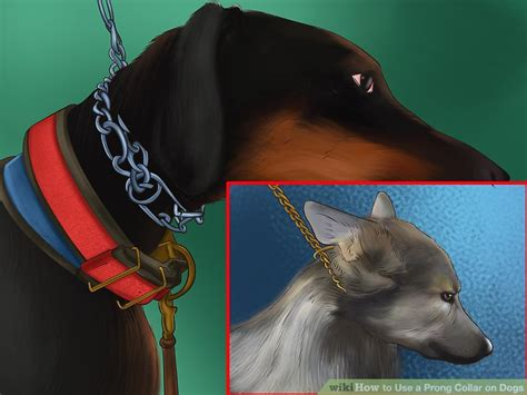 how to use a pinch collar for how to use a prong collar on dogs 9 steps with pictures