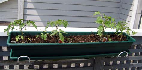 Tomaten Auf Dem Balkon 5347 by Tomaten Anbau Auf Terrasse Und Balkon Plantura
