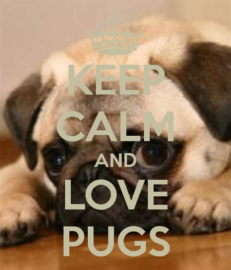keep calm and pugs discover and save creative ideas