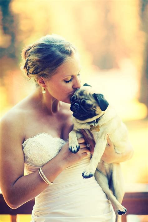 pug wedding dress 17 best images about friendly weddings on wedding day puppys and