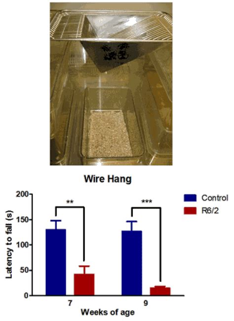 wire hang test behavioral  functional neuroscience