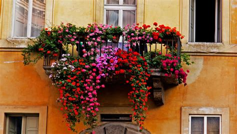 balconi fioriti foto balconi fioriti nel centro storico di avellino