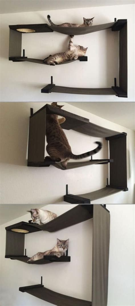 cat wall shelves climbing maze cats and what s the on