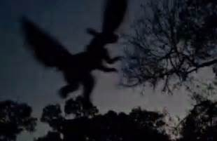 Is the jersey devil monster real hoax video and photo sightings claim