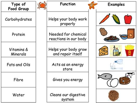 carbohydrates unit review crossword puzzle intro to food groups and differentiated worksheets by