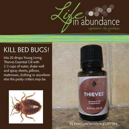 essential oils for bed bugs 17 best images about my young living essential oils on pinterest essential oil