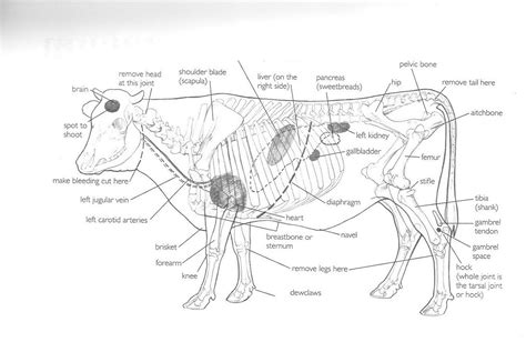 cow diagram cow diagrams printable diagram site