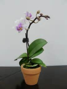 the gallery for gt indoor orchids