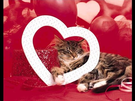 cat valentines tell your cat you them every day not just
