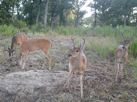 what can i feed deer in my backyard what can i feed deer in my backyard 28 images what can