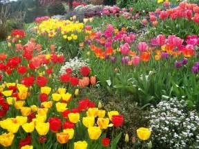 Tulip Flower Garden Tulip Garden At Ananda In Nevada City California