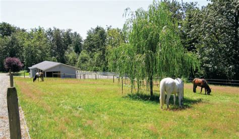 creating  perfect horse paddock expert advice