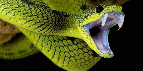 Animal World Snakes the most venomous snakes top 10 dinoanimals