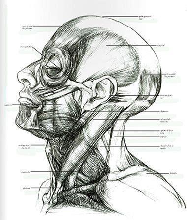 cuaderno de anatoma para c 243 mo dibujar el cuerpo humano 5 libros de anatom 237 a art 237 stica