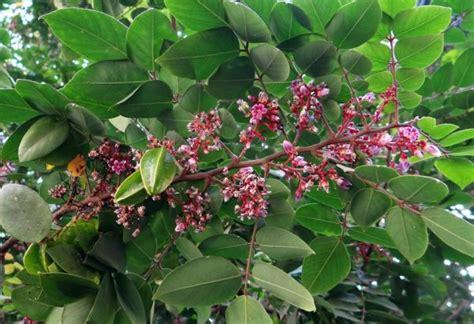 wann ist die einnistung abgeschlossen come coltivare gli alberi da frutto in vaso