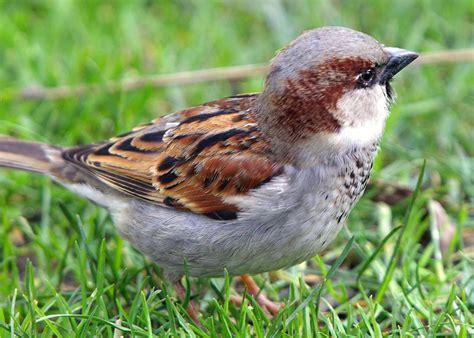 bird sparrow explore pakistan
