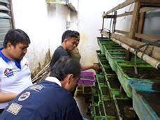 Cacing Temanggung penyuluh perikanan parakan kab temanggung pelatihan