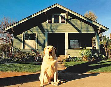 watch dogs house is a dog helpfull for house protecting image dog breeds picture