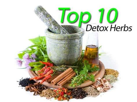 List Of Detoxing Herbs by The Top 10 Detox Herbs