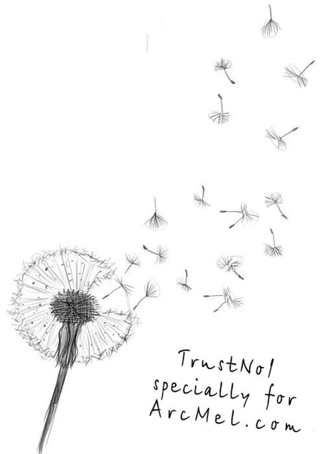 dandelion blowing drawing tumblr www pixshark com images galleries with a bite