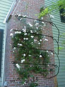 galvanized wire supports between eye bolts to support climbing rose on brick wall garden