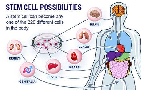 stem cells new applications of stem cell therapy nigeria today