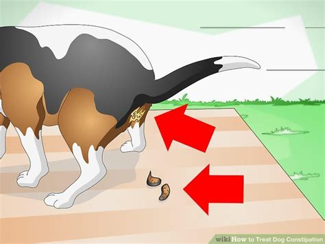 can dogs get constipated how to treat constipation 9 steps with pictures wikihow
