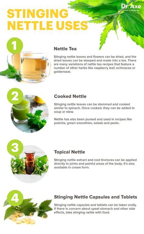 Leaf Detox Tea Benefits by Best 25 Nettle Tea Benefits Ideas On Nettle